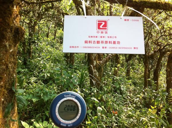 中乐号古树茶原料基地